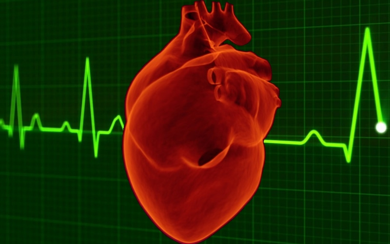 human heart with heart pulse graphic background