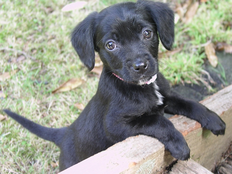 black puppy with front legs up on edge of step