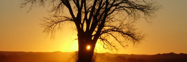 golden sunrise behind tree