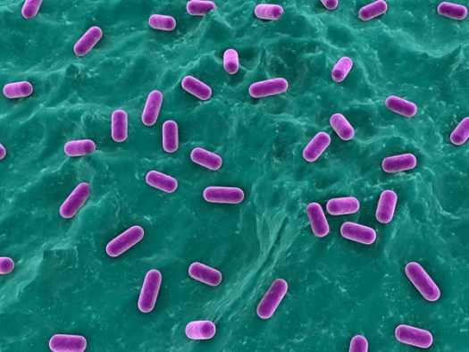 3d rendered close-up of isolated lactobacillus