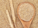 Wheat germ, wheat stalks, and wooden spoon