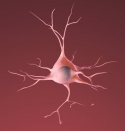 A healthy neuron