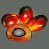 red palm fruit